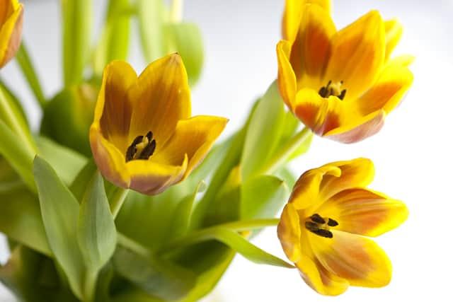Nine Fresh Spring Recipes