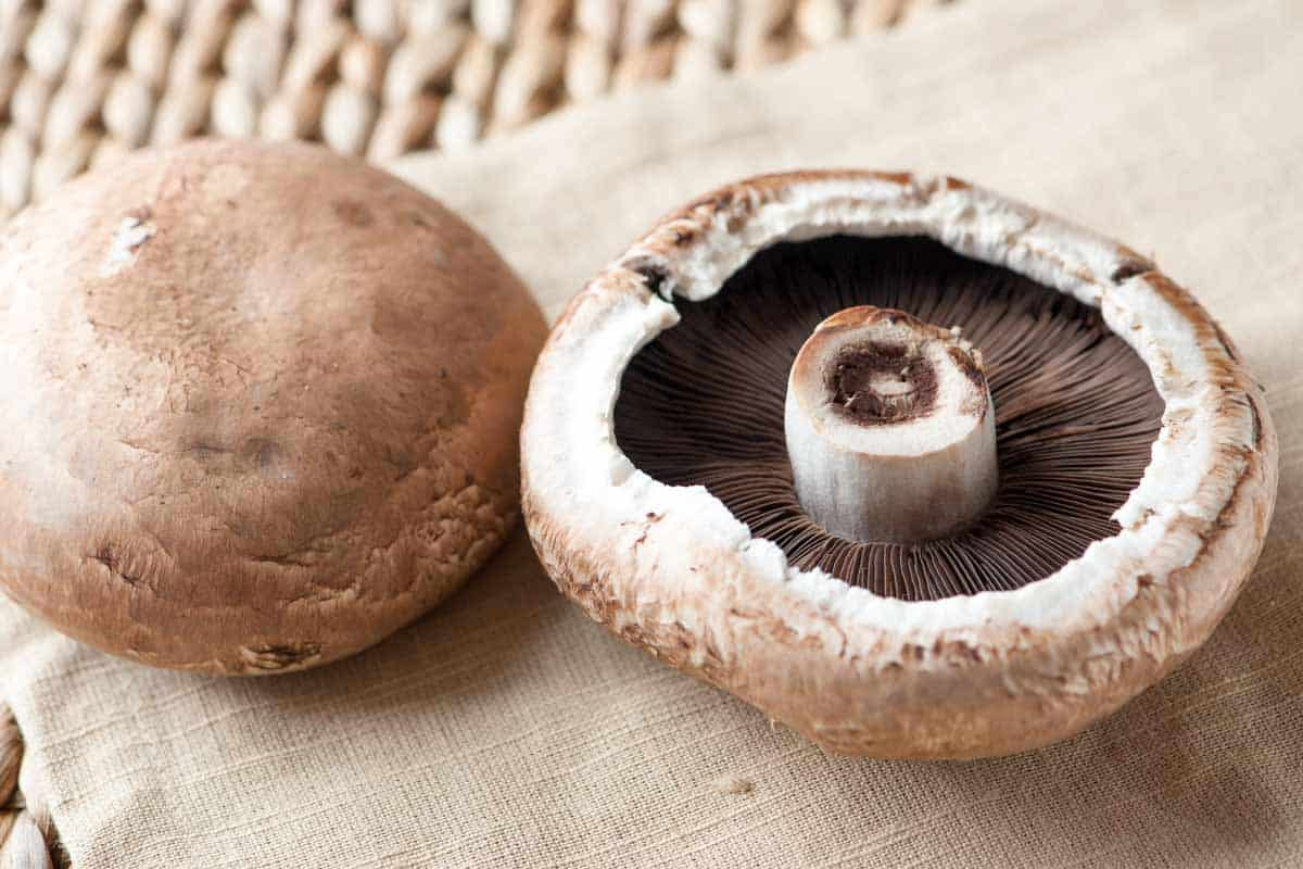 A Crash Course in Portobello Mushrooms