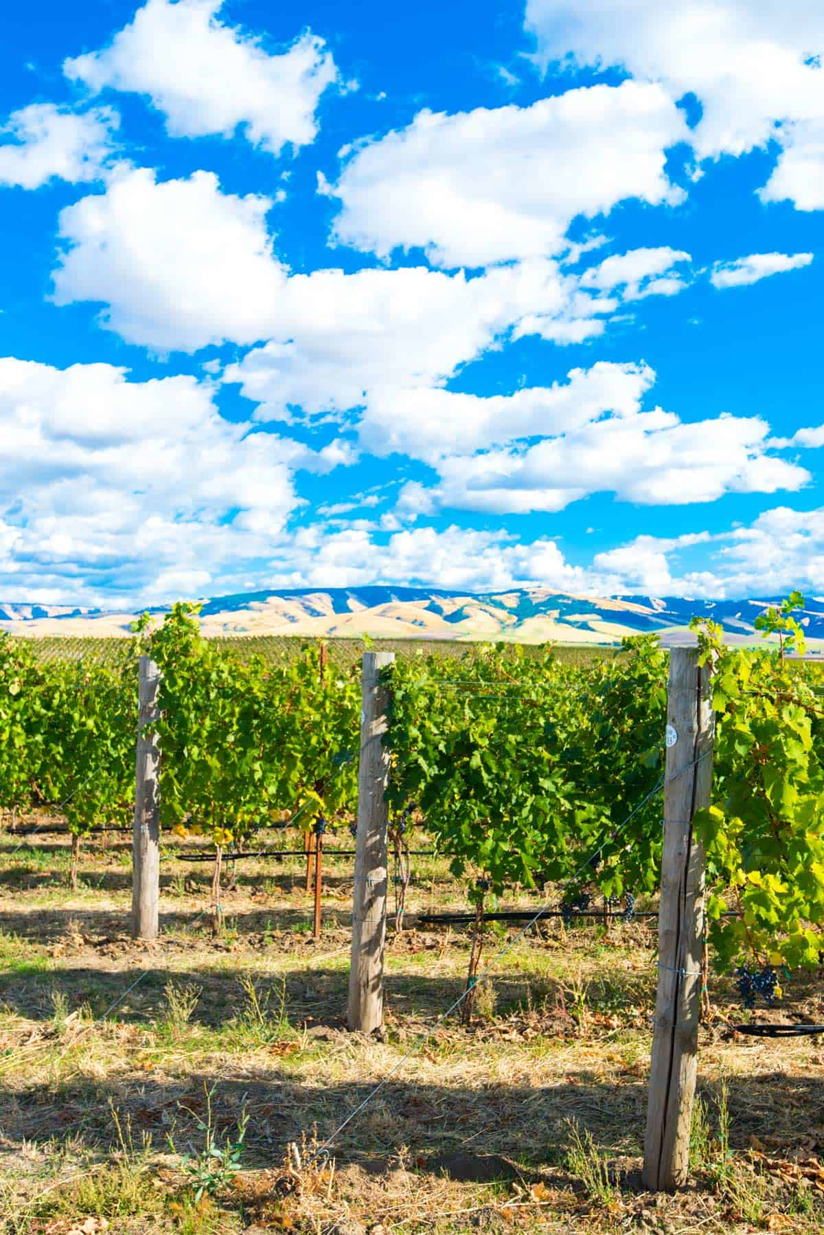 Gorgeous Views from Tranche Cellars, Walla Walla Wineries